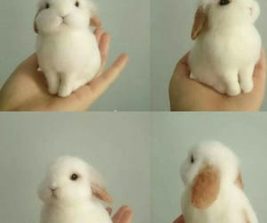 adorable, bunny, and animals image