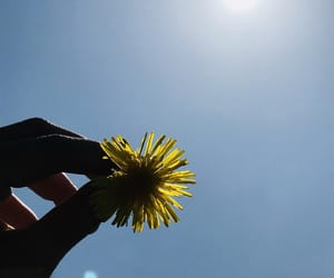 holiday, nature, and summer image