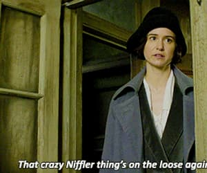 gif, katherine waterston, and fantastic beasts image