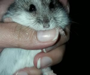 baby, hamster, and roedor image