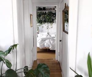 plants, room, and home image