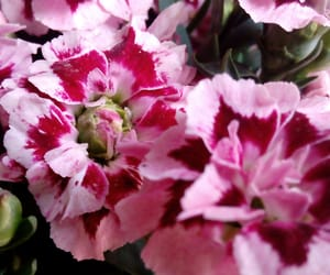 bouquet, flowers, and pink image