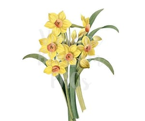 clipart, narcissus, and yellow image