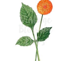 botanical, etsy, and flower illustration image