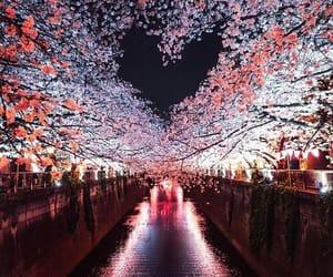 beautiful, heart, and japan image