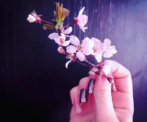 flowers, morning, and nails image