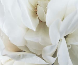 aesthetic, flowers, and white image