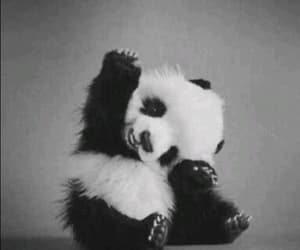 panda and animais fofos image