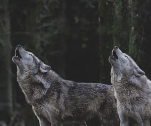 beauty, mate, and wolf image