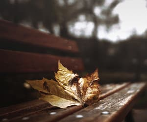 gif, autumn, and fall image
