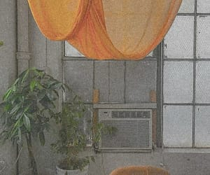 plants, home, and orange image