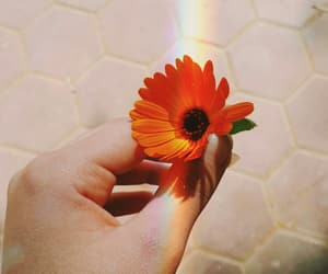 flower and tumblr image