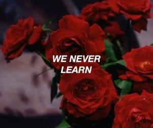 rose, quotes, and red image
