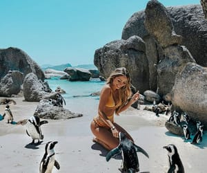 animals, model, and summer image