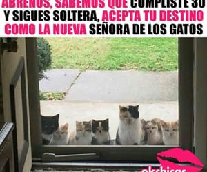 Animales, chistes, and Gatos image