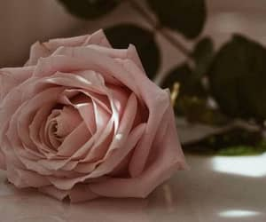 rose, flowers, and romance image
