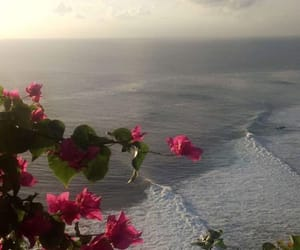 flowers, nature, and ocean image