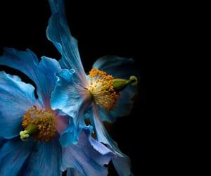 photography, macroflowerlovers, and #flickrfriday image