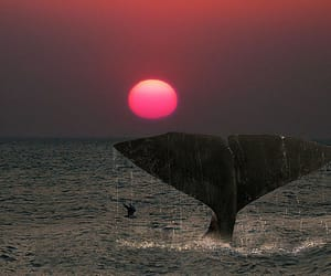 bravo, photography, and sperm whale image