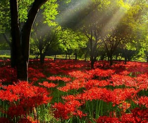 landscape, tree, and light image