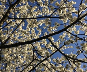 hello spring image