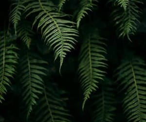 green, plants, and black image