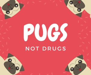 amor, drugs, and pugs image