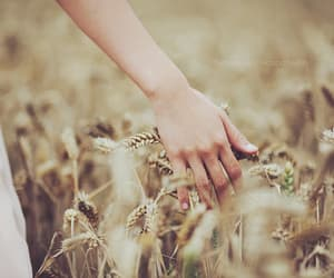 hand, field, and summer image