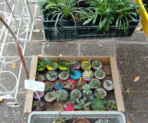 amor, suculentas, and cactus image