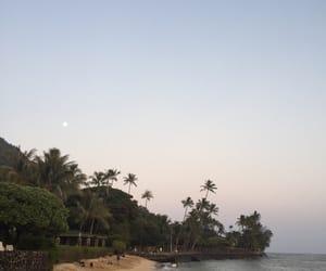 land, palmtree, and place image