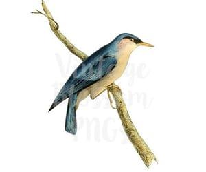 bird drawing, etsy, and vintage illustration image