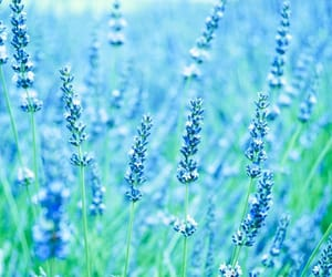 azul, blue, and field image
