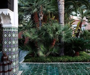 garden, marocco, and plants image