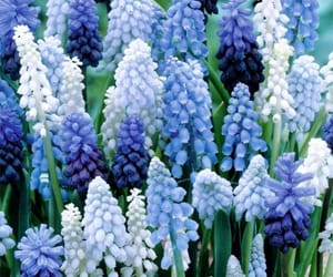 bloom, blue, and flowers image