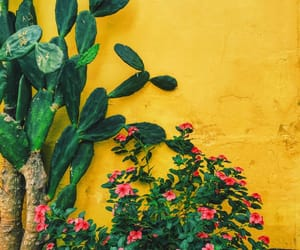 flowers, yellow, and cactus image