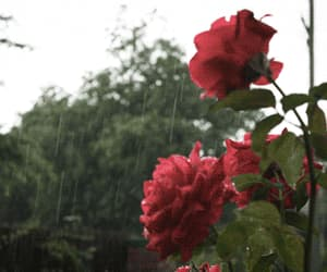 beautiful, red roses, and gif image