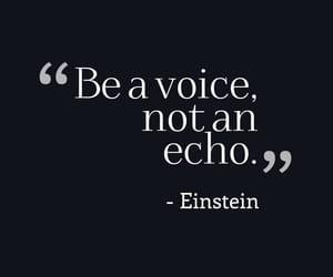 echo, einstein, and inspiration image