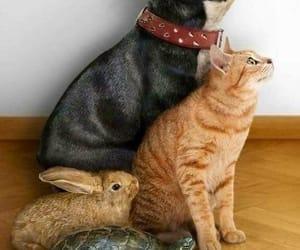 Animales, conejo, and perro image