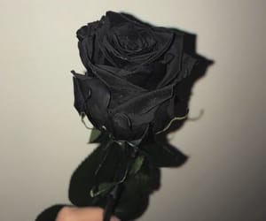 black, flower, and goth image