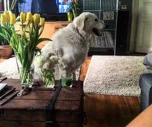 budapest, dog, and spring image