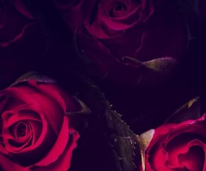 background, dark, and roses image