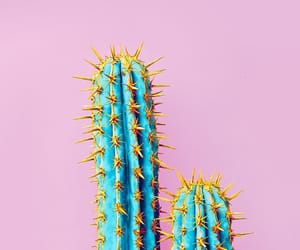 cactus, summer, and wallpapers image