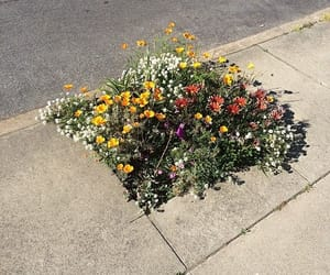 flowers, nature, and street image