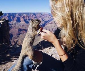 america, arizona, and grand canyon image