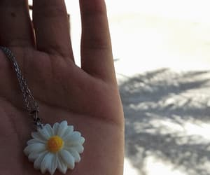 daisy, flower, and wonderful image