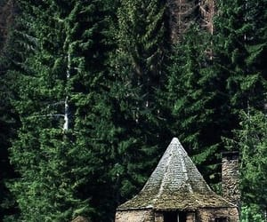 forest and hagrid image