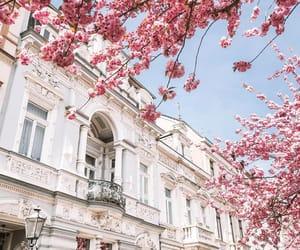 blossom, flowers, and cherry blossom image