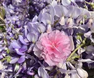 aesthetic, flower, and lilac image