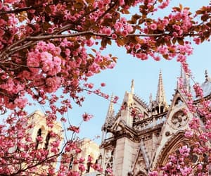 architecture, blossom, and cherry image