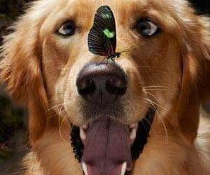 buterfly, pet, and dog image
